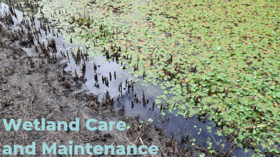 Wetland Care and Maintenance