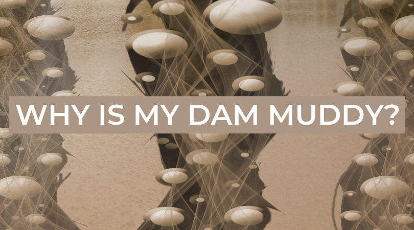 WHY IS MY DAM MUDDY?