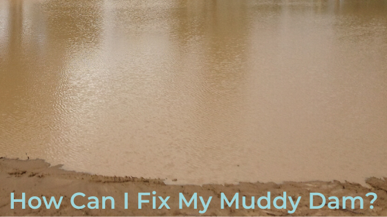 How Can I Fix My Muddy Dam? Clearing Dam Water