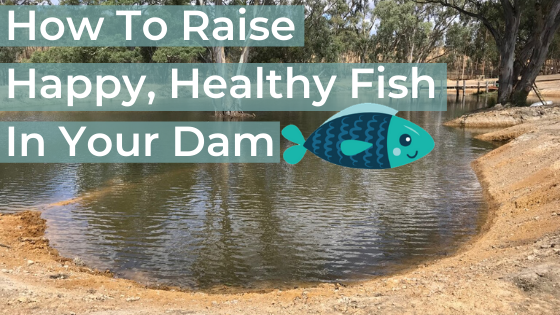 Keeping Fish In My Dam